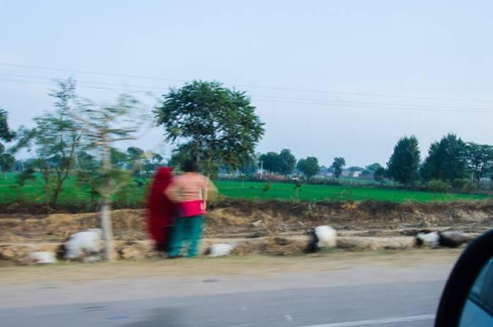 Roadtrip Rajasthan Bharatpur Gurgaon (3)