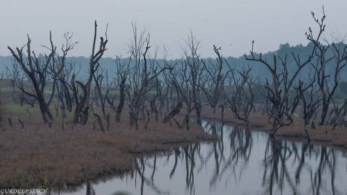 Wetlands of Dudhwa National Park