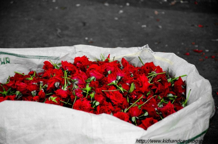 Red Roses for Sale at Gudimalkapur Flower Market Hyderabad