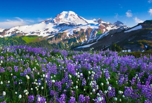 Обои горы, цветы, природа для рабочего стола, картинки ...