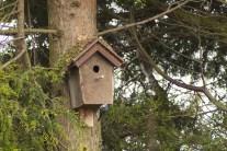 vogelhuisje dichtbij (1)