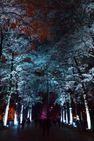 Kathedraal van bomen