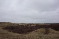 burgerlijke duinen