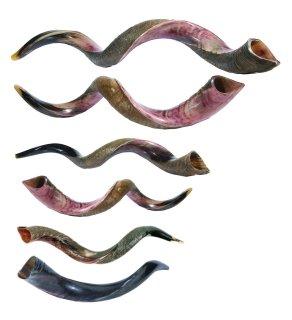 shofar-varios-blog-dab-radio-wordpress.jpg