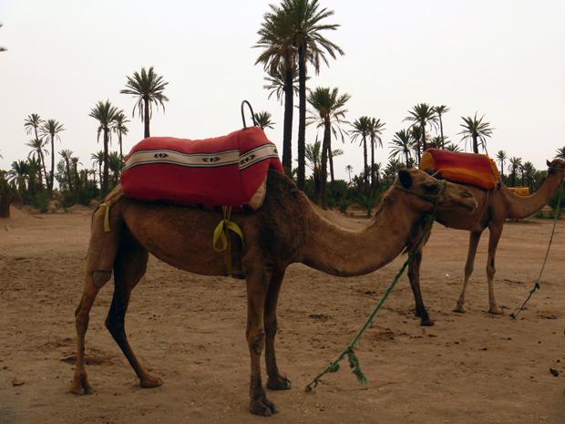 bate-volta a partir de marrakech: Essaouira