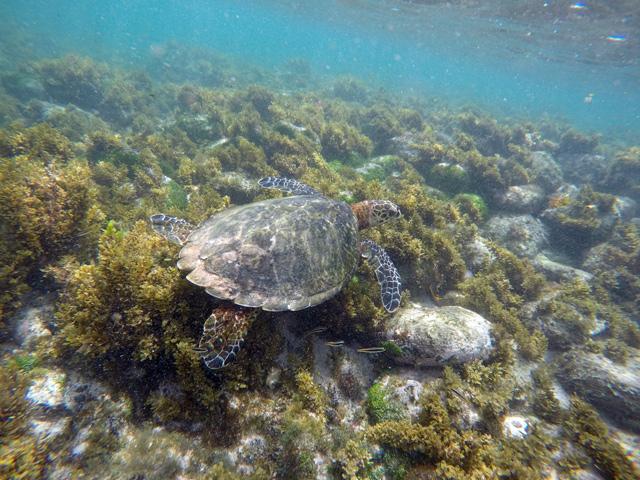 Trilha do Morro São José, a melhor trilha de Fernando de Noronha, feita a nado