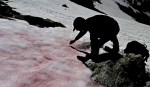A Glacier in Italy is Turning Pink. And That's Not Good News For South Asia Also