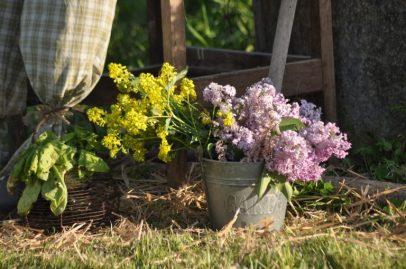 bouquet de colza
