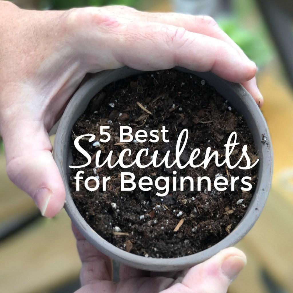 Beginner's Guide to Succulents