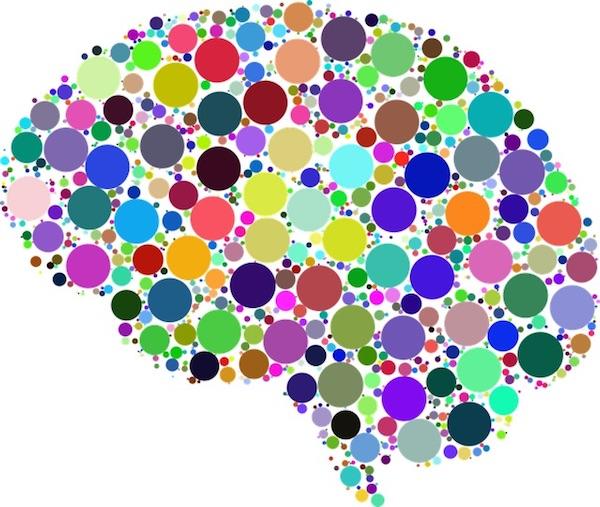 cerebro neuronas despierta y entrena