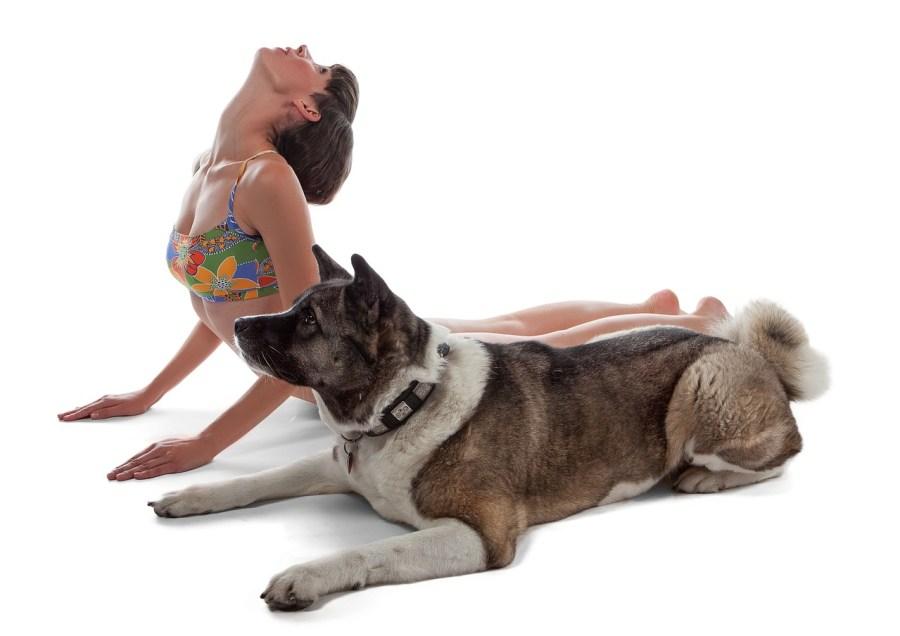 yoga con animales perros