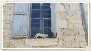 chat-devant-fenêtre-La-Romieu