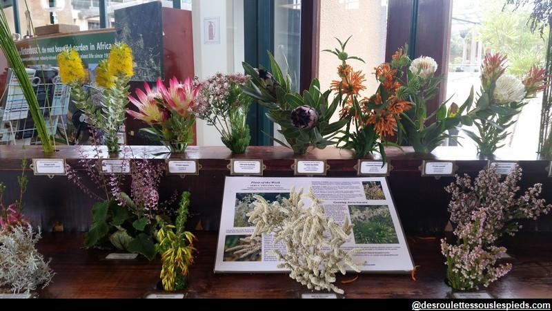fleurs endémiques de l'Afrique du sud