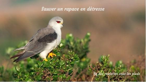 Oiseau tombé du nid dans le Gers : histoire d'un sauvetage
