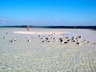 Coco Cay Birds