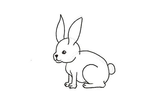étape 3 - les contours du lapin