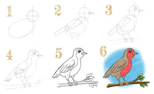 Comment dessiner un rouge gorge en 6 étapes simples