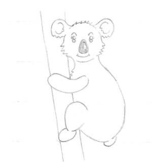 Le dessin des détails d'un koala femelle