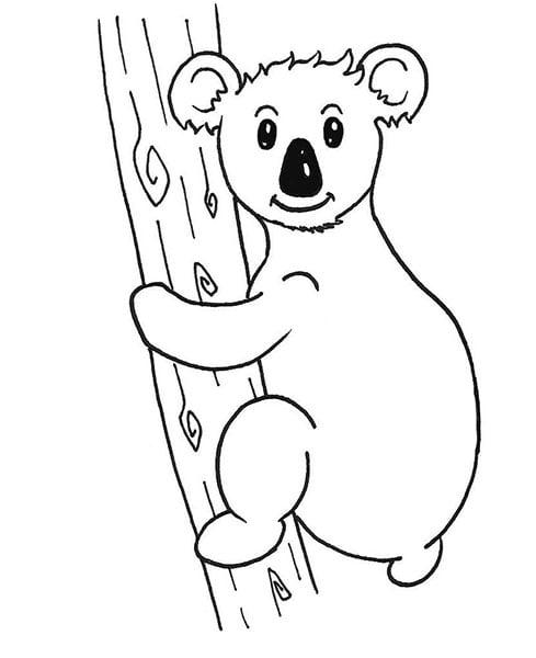 encrage du dessin de koala mâle
