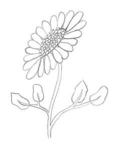 terminer le dessin de la pâquerette de profil avec une tige et des feuilles