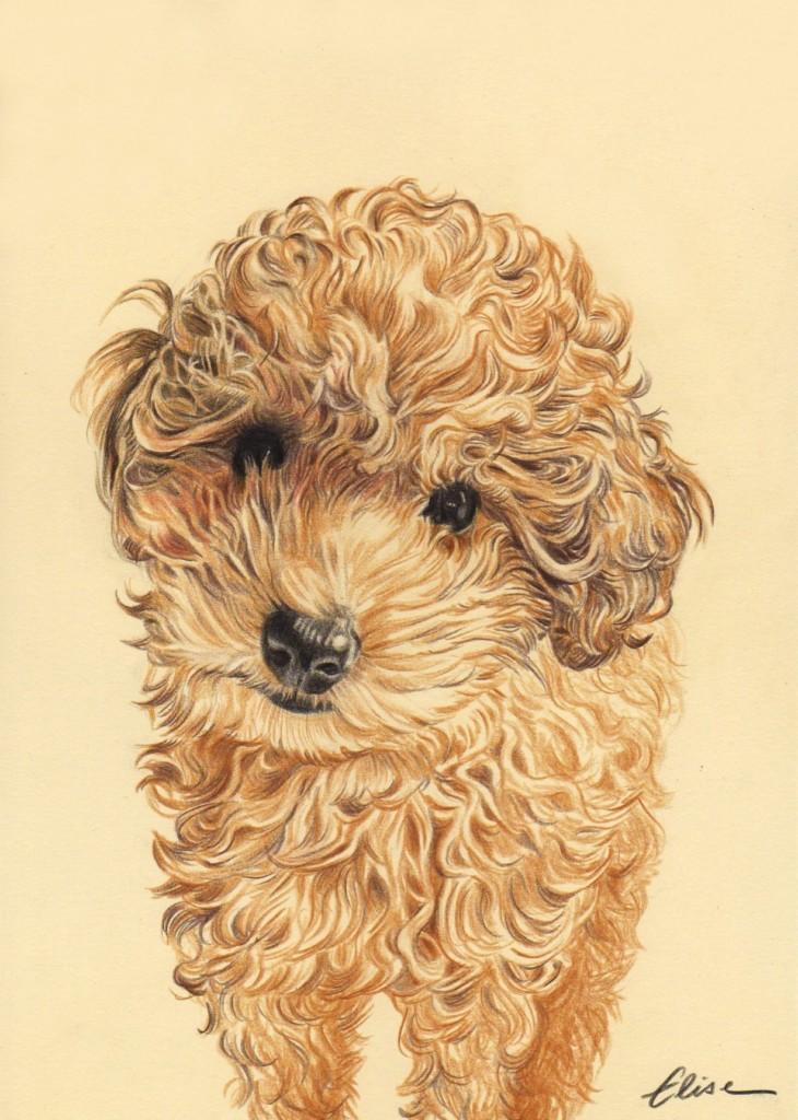 Commandez un portrait dessin de vos animaux d 39 apr s photos - Dessin caniche ...