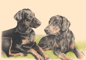 Portrait dessin d'après photo de chiens doberman allongés sur l'herbe