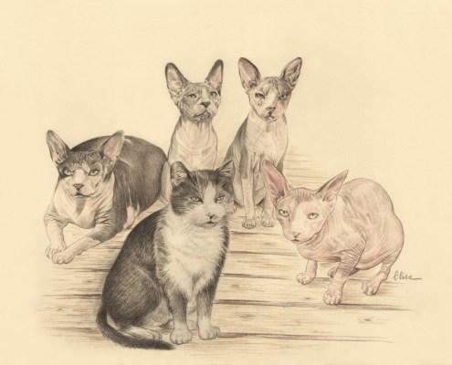 Portrait dessin composé d'après photos de chats sphynx