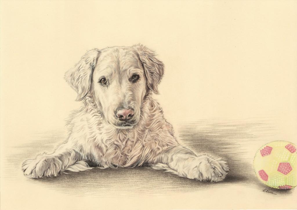 Commandez un portrait dessin de vos animaux d 39 apr s photos - Dessin d un chien ...