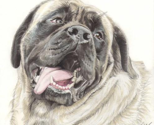 Portrait dessin d'après photo d'un chien haletant