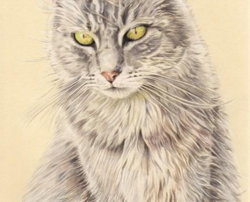 Portrait dessin d'après photo d'un chat en couleur