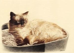 Portrait dessin d'après photo d'un chat dans son panier
