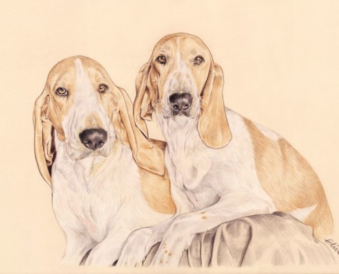 Portrait dessin d'après photo de deux chiens en couleur