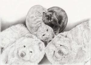 Portrait dessin d'après photo de deux chiens et deux chats en noir et blanc