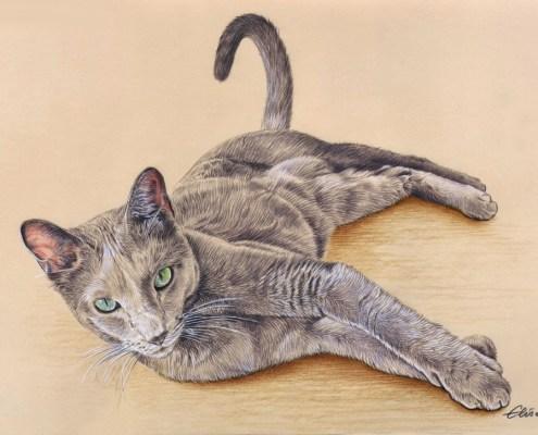Portrait dessin d'un chat allongé en couleur