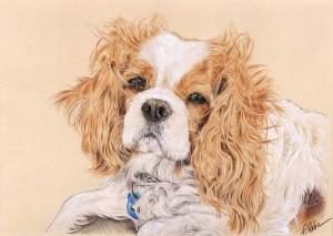 Portrait dessin d'un chien cavalier king charles