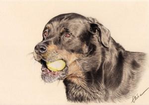 Portrait dessin d'un chien jouant à la balle