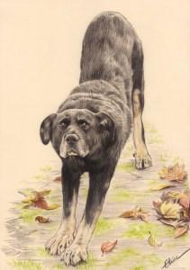 Portrait dessin d'un chien s'étirant