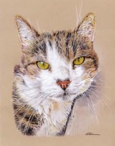 Portrait dessin d'après photo d'un chat aux yeux verts