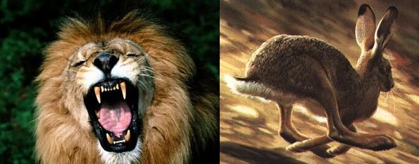 leone-coniglio