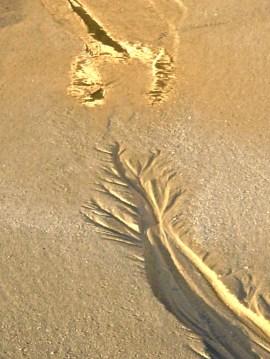 Wet Sand Reflection !