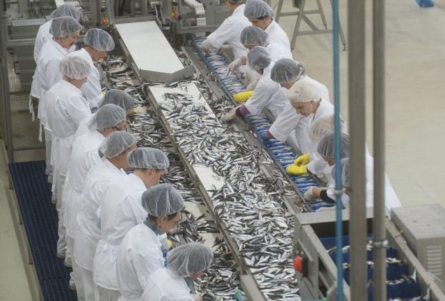 Nova tvornica Sardina