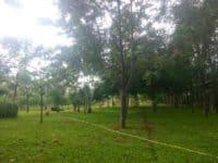 Taman Hutan Penjaringan