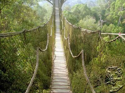 Taman Nasional Kalimantan Tengah - Bukit Baka - Bukit Raya
