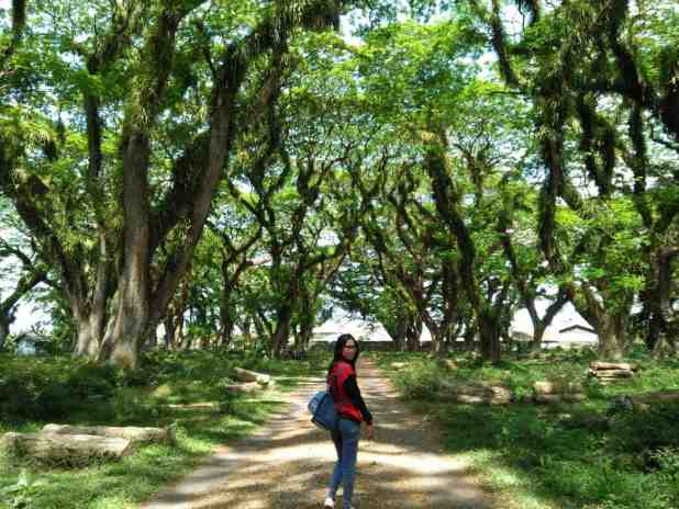 Hutan Wisata Jawatan. Destinasi Pariwisata Terpopuler di Banyuwangi