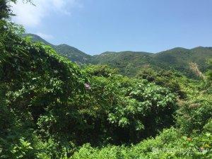 Der subtropische Wald auf Lamma Island