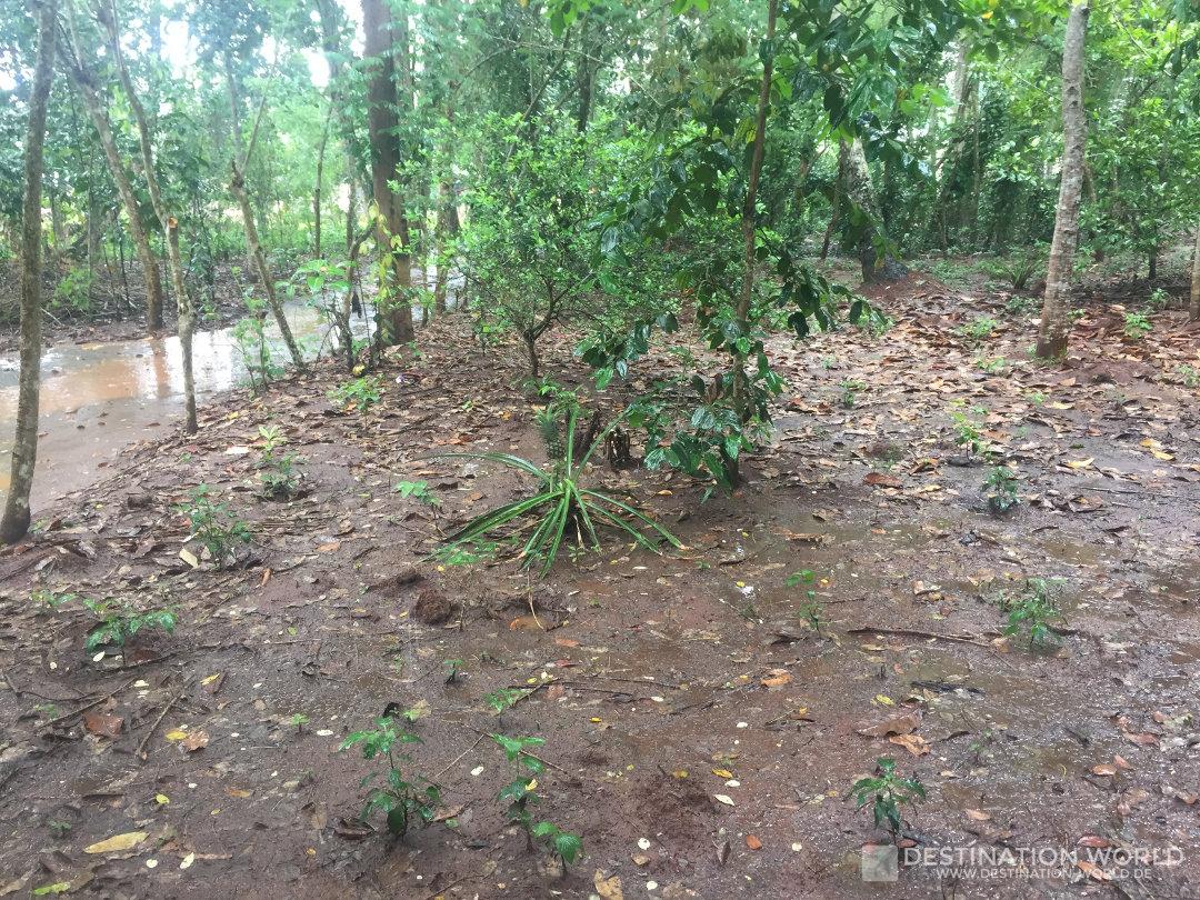 Sansibar, Spice Tour durch die Gewürzfarm