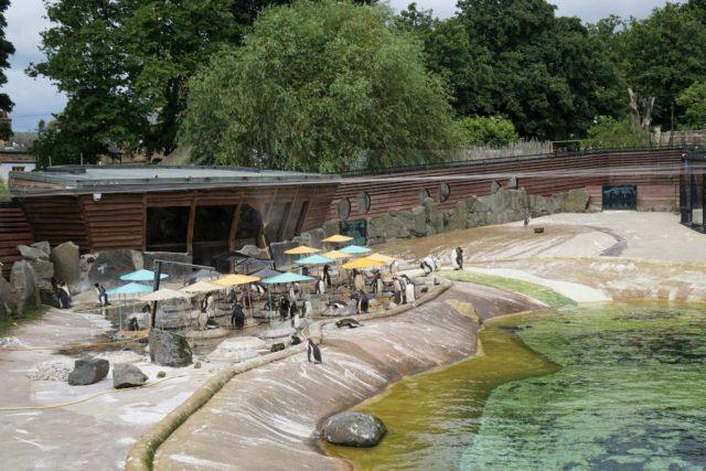 Penguins Edinburgh Zoo