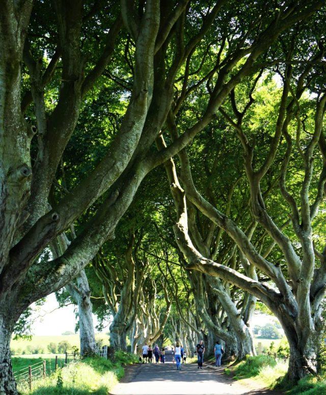 Dark Hedges rundrejse Nordirland