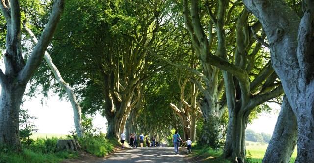 Dark Hedges Nordirland rundrejse