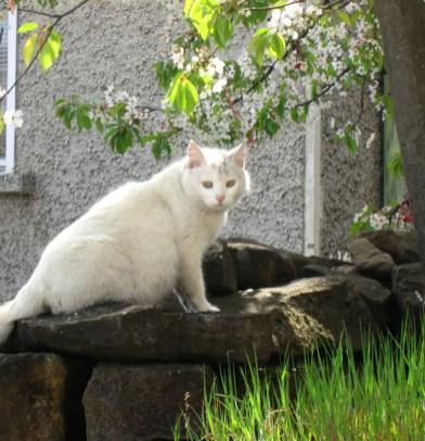 Пролетна котка